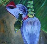 Kauai Still Life pastel paintings