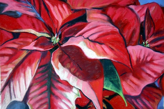 Pointcettias, pastel artwork by Kauai artist Helen Turner